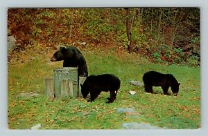 Three Black Bears Raiding Trash Can, Chrome Postcard