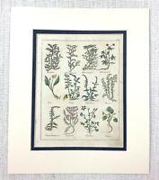 1810 Antico Mano Colorato Incisione Botanico Cinquefoils Coltsfoot Pianta Erbe