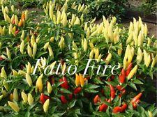 HOT CHILLI PEPPER - PATIO FIRE - 20 SEEDS