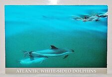 Lot of 14! Vintage Maine East Coast Sailboats Scenic Souvenir Postcards *Unused*