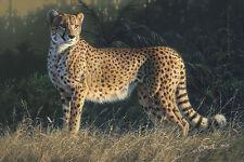 Daniel Smith DUMA giclee canvas Cheetah #100/100