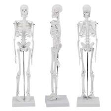 US Human Anatomical Anatomy Skeleton Fexible Medical Model  School Teaching 45CM