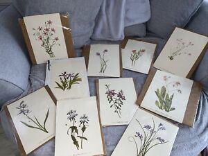 Lot Of 10 Mary Vaux Walcott botanical Prints NIP