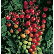 """Small Red Cherry Tomato *Heirloom* (100 Seed's) """" FREE SHIPPING"""" <Non-GMO>"""