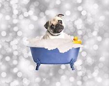 Blue Gray Brown Home Decor Pug Dog Wall Art Bath Tub Photo Print Matted Picture