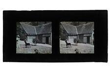 France Homme avec des chiens Autochrome Lumière Stéréo Grand Format 8x17cm