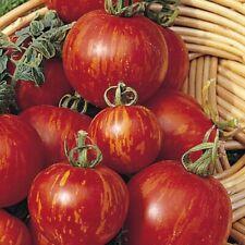 20 graines de Tomate zébrée TIGERELLA BIO