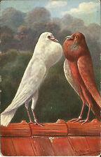 "Boots Cash Chemist ""English Birds"" Pelham Series 29 Two Birds Rooftop Bavaria"