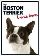 Boston Terrier Lives Here A5 Plastic Sign