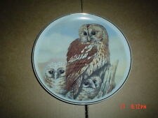 NBJ China Staffordshire Collectors Plate TAWNY OWL