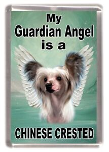 """Chinese Crested Dog Fridge Magnet """"My Guardian Angel is a ......"""" by Starprint"""
