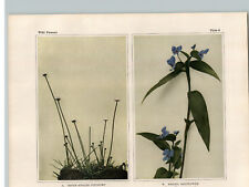 1934 Wildflower Book Plate 7-Angled Pipewort, Asiatic Dayflower, Skunk Cabbage