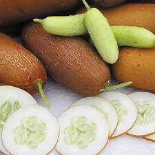 Cucumber-Puneri  Poona Kheera  Indian Cucumber 10 finest Seeds