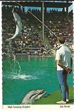 High Jumping Dolphin Sea World Amusement Park   Postcard