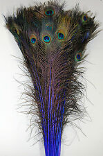 "25 Pcs DYED PEACOCK Feathers 35""-40"" ROYAL BLUE ; Halloween/Costume/Burlesque"