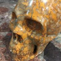"""5.3"""" Natural Coral Fossil Carved Crystal Skull Realistic Healing Skeleton #4005"""
