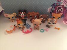Littlest Pet Shop bundle. RARE les chats et Chiens, comprend des accessoires illustrés.