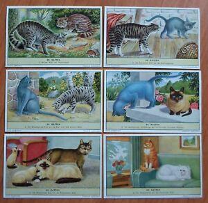 6 LIEBIG CARDS / cats Siamese Persian Tabby Manx Burmese Blue Angora Isle of man