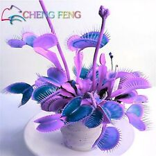 100 Potted Insectivorous Plant Seeds Dionaea Muscipula Seed Giant Clip Rare