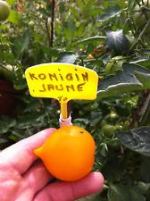 graines de tomates konigin jaune vendu en sachet de 30 graines  procédé bio