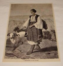 1891 magazine engraving ~ A Shepherdess Of The Caucasus Sheep