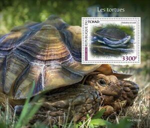Chad 2021 MNH Turtles Stamps Roti Island Snake-Necked Turtle Reptiles 1v S/S