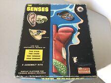 Vintage 60s# THE SENSES Anatomical Assembly Model Kit By Renwal#NIB