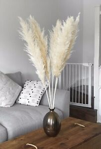 pampas grass large white/cream tall 5 stem 110cm  with 45-50cm real dry flower