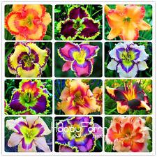 100 Pcs Hybrid Daylily Flowers Seeds Hemerocallis Lily Indoor Bonsai Seeds