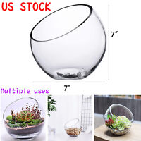 Glass Fish Bowl Glass Planter Terrarium Plant Holder Glass Vase Desktop Decor