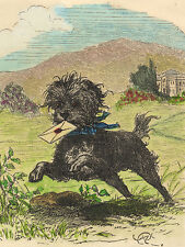 AFFENPINSCHER CHARMING DOG GREETINGS NOTE CARD BEAUTIFUL DOG WITH LETTER