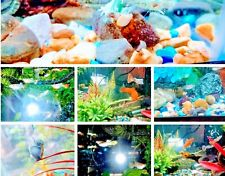 LIVE TRUMPET, Mystery Snails and Freshwater Aquarium Assorted Guppy Fish Combo
