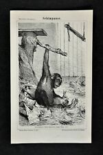 1875 Meyer Animal Print African Chimpanzee Mammal Chimp Ape Pan Troglodytes