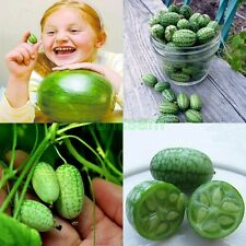 10Pcs Green Cucamelon Seeds Mini Finger Watermelon Vegetable Fruit Home Garden