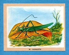 NATURAMA - Lampo 1968 - Figurina-Sticker n. 64 - CAVALLETTA -Rec