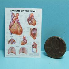 Dollhouse Miniature Replica Science Medical Human Heart Chart L4013