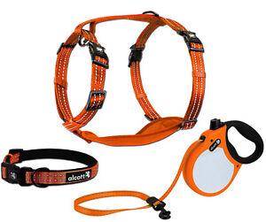 alcott Visibility Retractable Dog Leash or Harness or Collar - NEON Orange S M L