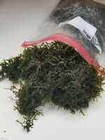 Half GALLON BAG Moss for aquarium live plant Christmas moss BUY3get1free