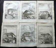 Comte de Buffon C1770 Lot of 6 First Edition Animal Prints. Book Plates