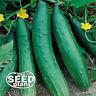 Sweet Burpless Cucumber Seeds - 25 SEEDS NON-GMO