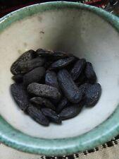 Tonka Beans - 5 pieces - Dypterix odorata