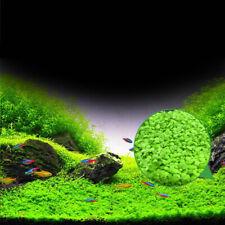 Super ANGEBOT 4 x 1000 St.Samen für Aquarien Süswasser u.Feuchtterrarien H