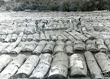 Afrique. Gabon . train de bois sur l'Ogoue . bois flotté . Flottage . 1950/1960