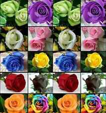 Fd710 10 Colors Rose Seed Colorful Total X100 Seed Flora Garden Lover /100 Seeds