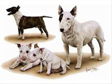 Bull Terrier Group Dog Robert May Art Greeting Card Set of 6