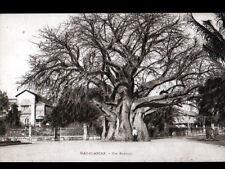 MADAGASCAR / VILLAS & BAOBAB animé , cliché période 1920-1930