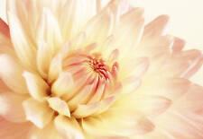 Canvas Picture Floral Cream Pink Flower Artwork Framed