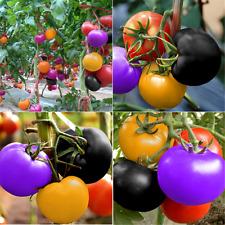 100PCS Cute Rare Rainbow Tomato Seeds Ornamental Potted Vegetable Seeds