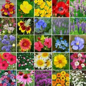 ALL HEIRLOOM Flower Mix 25 Species Perennial/Annuals Plant Now!Non-GMO 500 Seeds