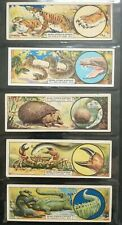 More details for animal offence & defence typhoo tea cards full set of 25 .1928
